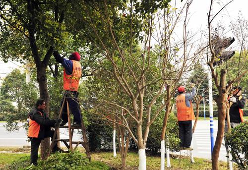 连云港着手冬季园林绿化管理养护