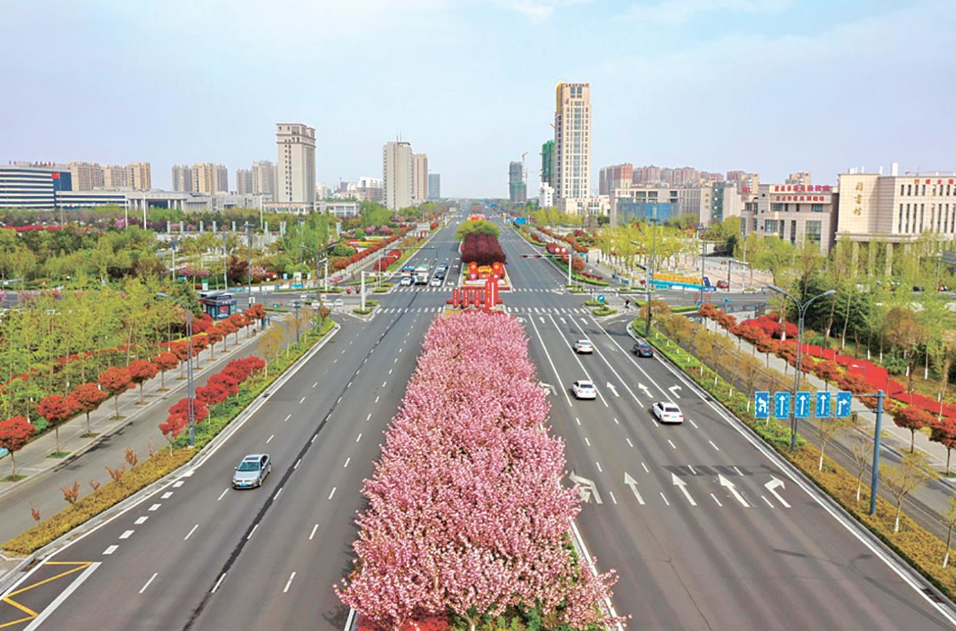 赣榆新城区樱花盛开