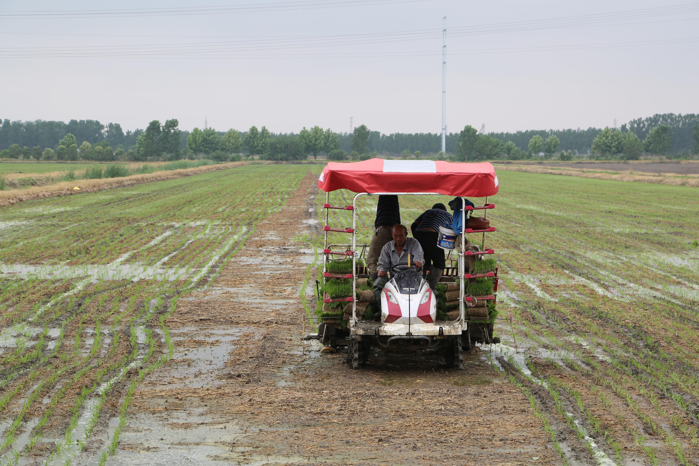 岗埠农场水稻栽插工作有序推进