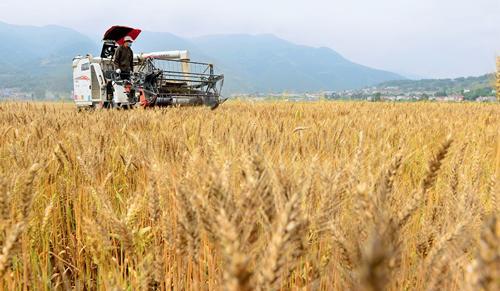 """海州全力以赴挑好""""金扁担""""确保30.4万亩小麦丰产丰收"""