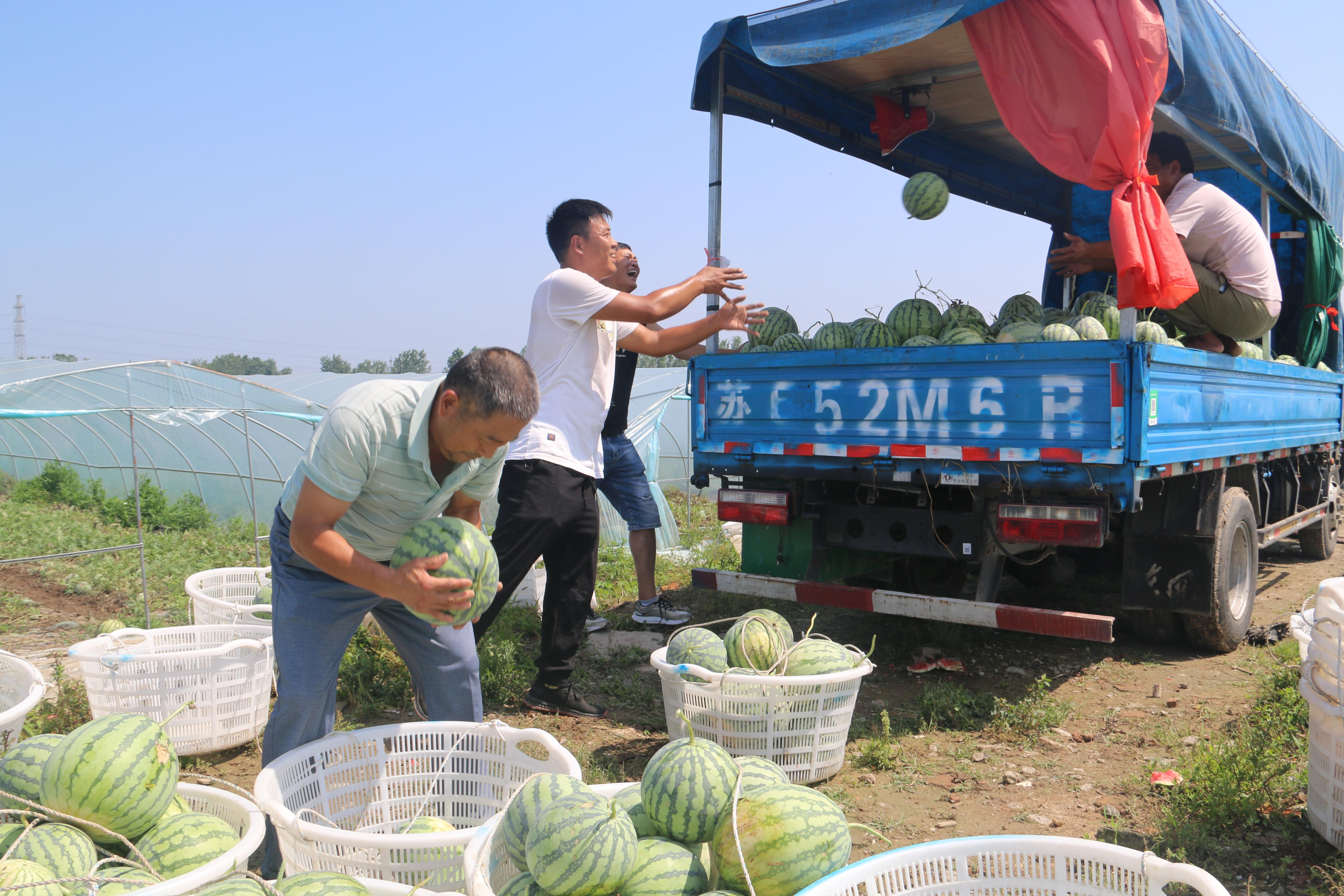 灌南田樓現代農業助力增收