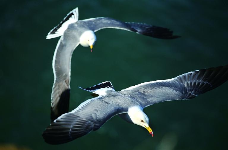 連云港加大保護力度 為鳥類提供得天獨厚棲息地