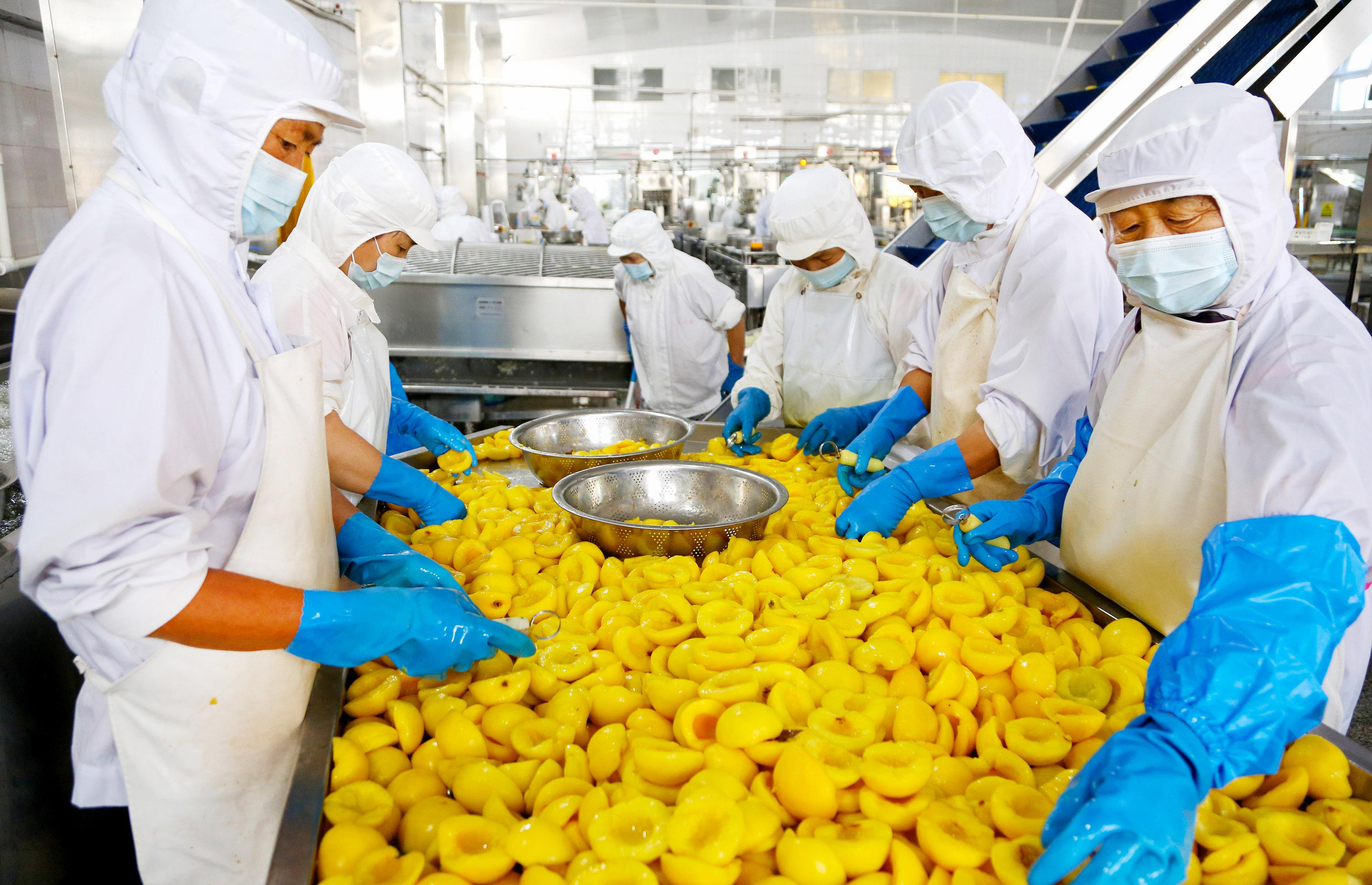 黃桃進入收獲季節 罐頭暢銷國內外市場