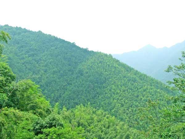 五梅山风景区